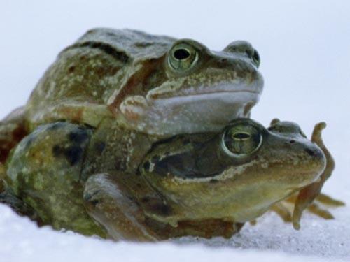 1467_frogs_nobwild34.jpg